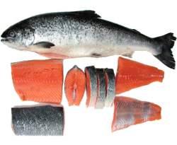 Gambar Ikan Salmon - Manfaat Ikan Salmon untuk Tubuh