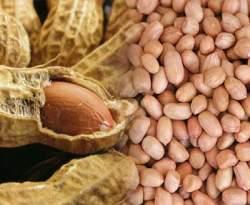 Gambar Kacang Tanah - Manfaat Kacang Tanah untuk Kesehatan