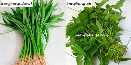 Gambar Manfaat Sayur Kangkung