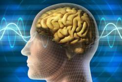 Manfaat Puasa untuk Otak Kita