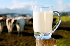 Gambar Susu Sapi - Manfaat Susu Sapi