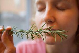 Cara Mempertajam Daya Indra Penciuman