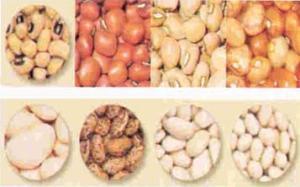 Manfaat Kacang-kacangan