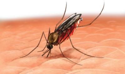 Cara Mengusir Nyamuk dari Rumah