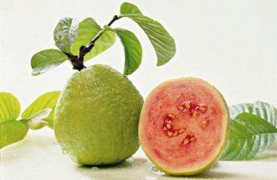 manfaat jambu biji bagi kesehatan