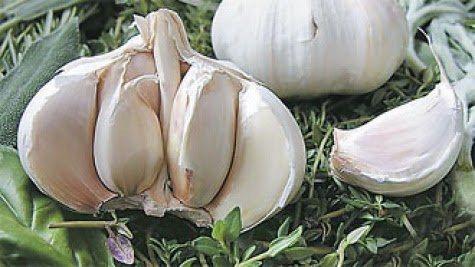 Bawang Putih Sebagai Pestisida Alami