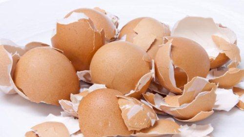 Gambar Kulit Telur Ayam