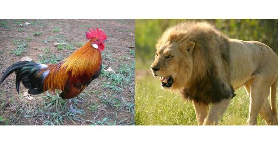 Gambar Hewan dan Binatang