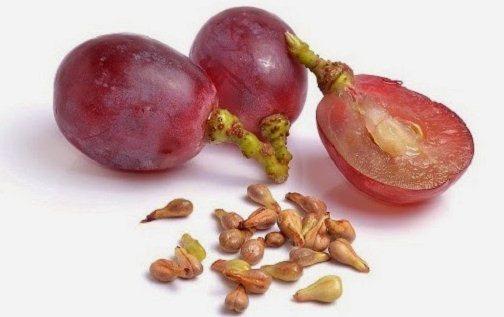 Gambar Biji Buah Anggur