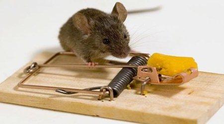 Gambar Alat Perangkap untuk Tikus