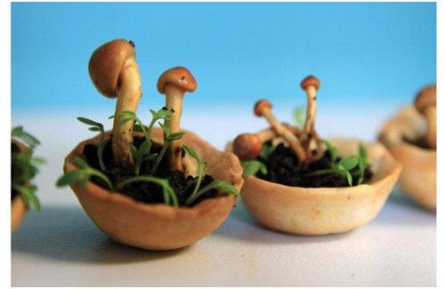 Gambar Edible Growth, Konsep Tanaman 3D yang bisa dimakan